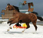Hra - Horse Puzzle
